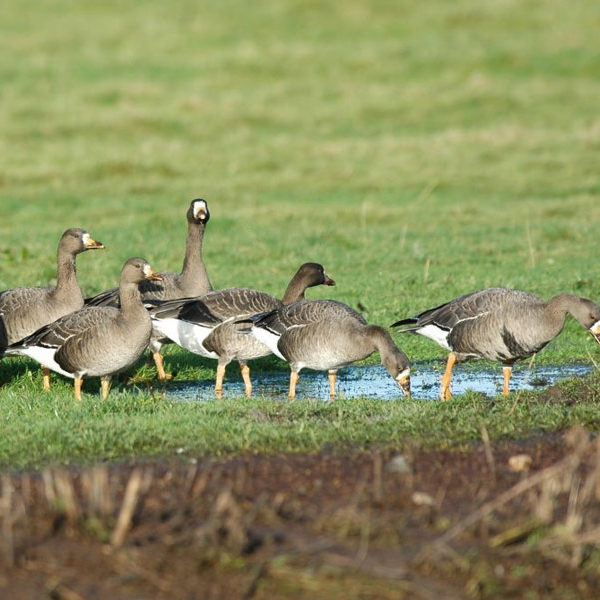 wexford-wildfowl-reserve